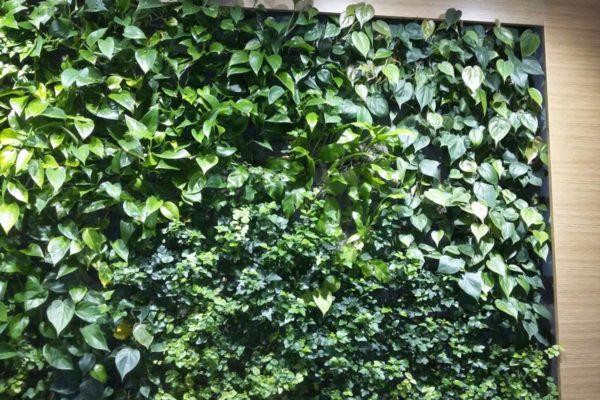 Vertical greenery Green Safe