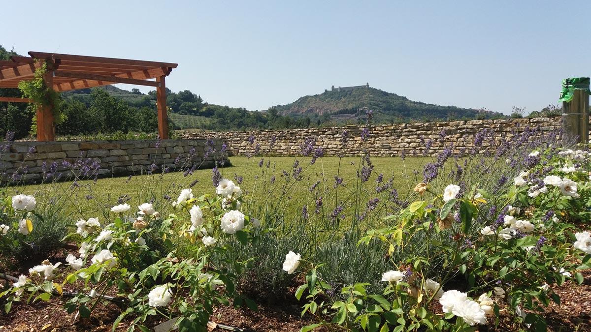 Assisi – Intensive Hanging Greenery