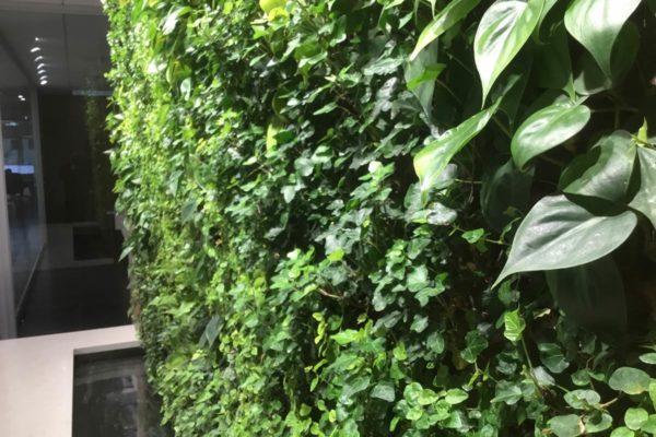 Parete Verde Verticale indoor