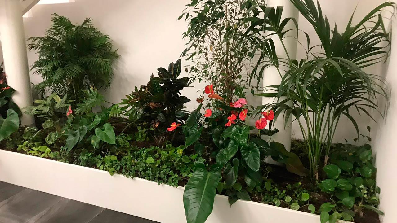 Indoor Extensive Hanging Greenery